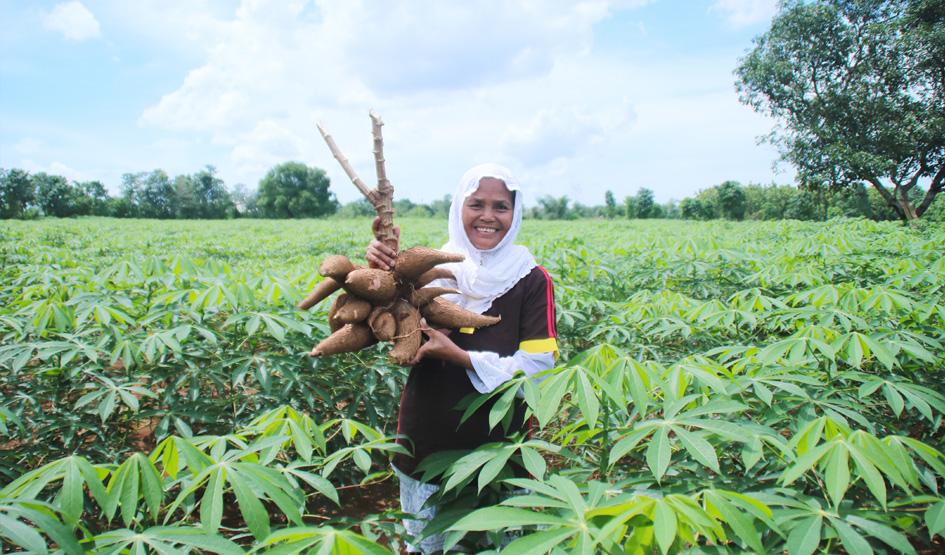 Meningkatkan Kualitas Hidup Para Petani Ubi Di Makassar
