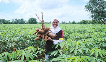 Improving the livelihoods of Cassava Farmers in Makassar